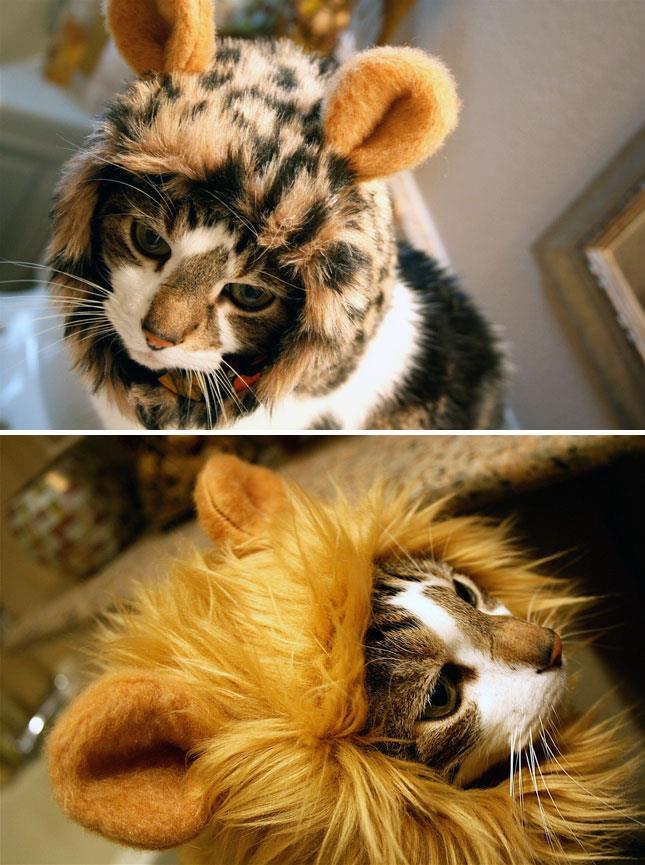 leones gatos