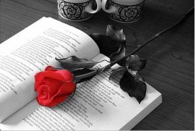 libro+y+rosa2_mágico_despertar