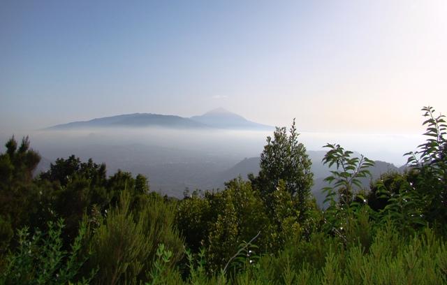 10. Teide desde el Monte de las Mercedes