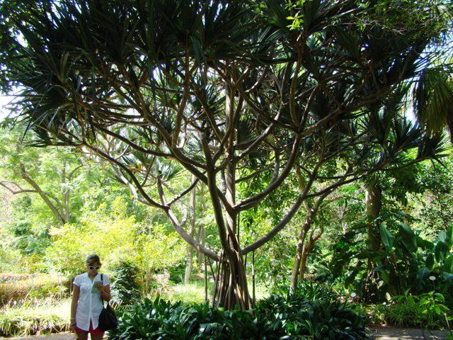 9. Jardín Botánico - Pto Cruz