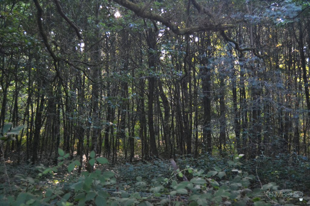 foret-de-broceliande1