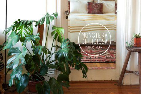 portada-monstera